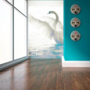 la hermosura y la simbología del cisne
